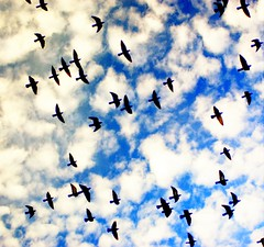 Birds and Clouds (aremac) Tags: blue birds clouds d50 nikon bravo nikond50 abigfave 123f50 impressedbeauty