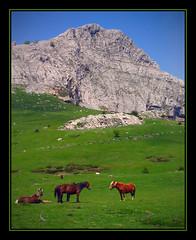 Arrabako Landak (Ins GFM) Tags: world blue horses naturaleza verde green animal canon catchycolors geotagged caballos countryside spring bravo europe colours colores pi cielo zb ifc silvestre euskalherria basquecountry canonpowershot gorbeia iloveit magicdonkey specland toprural flickrpix fotosdearaia originalcomment abigfave ibarrekofotoclub p1f1 ci33 picswithframes geo:lat=43036776 geo:lon=2766838 inesg araiane
