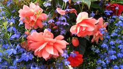 whitby - Sandsend  flowers 1 (Internet & Digital) Tags: flowers sands end hotel summer petal bright