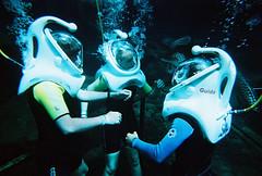 Chillin (amber {in the shadow of za'ha'dum}) Tags: wedding hawaii honeymoon underwater oahu 2006 snuba seaturtle eagleray sealifepark disposiblecamera