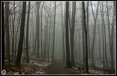 In The Mist (Brian-D) Tags: winter usa mist nature fog forest woods jungle
