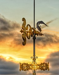 A crow takes flight at sunset from a gilded caduceus of the Printemps department store in Paris (alcowp) Tags: flight sunset corbeau crow caduceus printemps france paris