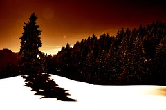 let it snow... (dolcedo) Tags: light shadow sun snow tree topf25 austria bravo bludenz vorarlberg interestingness43 dolcedo i500 impressedbeauty muttersberg