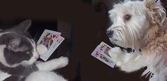 'Poker Animals' - pejnolan on Flickr