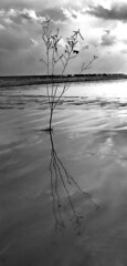 Asymmetry (NesQuarX) Tags: blackandwhite india plant reflection tree beach silhouette clouds composition photomanipulation photoshop cool nikon serene striking kolkata e4600 nikonstunninggallery midnaporeanddigha arkosen nesquarx