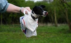 Doggie Bag. photo by Cerc via Creative Commons