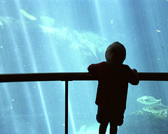 Come with us (-Antoine-) Tags: blue sunlight fish canada topf25 water silhouette geotagged aquarium kid topv333 eau child montral quebec montreal beam bleu qubec biodome rayon fishes poisson enfant poissons biodme geo:lat=455597 geo:lon=735494 color:hsv_avg=7e7bba color:hsv_med=8a71d9 color:rgb_avg=61bab7 color:rgb_med=79c0d9 antoinerouleau