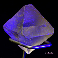 Fluorite Octahedron under a black light (LW UV) (Orbital Joe) Tags: blue topv111 closeup rocks glow crystal blacklight mineral canondigitalrebel fluorite themelightandshadow tccomp006