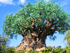 The Magic Tree (_Paula AnDDrade) Tags: trees photography interestingness disney animalkingdom treeoflife disneysanimalkingdom digitalphotography paulaanddrade