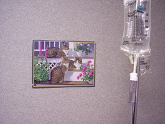 100_1485 (mira d'oubliette) Tags: remicade infusion iv medical doctor