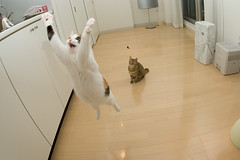 DSC_4619 (junku) Tags: cats topf25 cat fun jump jumping nikon kitten d70 topc50 kitties topv777 topv9999  kin   fuwari flickys sigma15mmf28exfisheye excellenceinsets airbornecat airbornecats