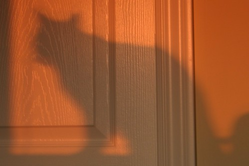 Cat Shadow in Sunset