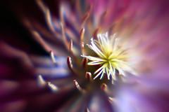 Flower, Up Close