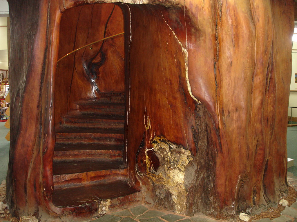 Spiral Stairs carved out of a Kauri Tree at the Ancient Kauri Museum, New Zealand