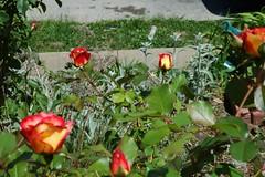 BevyOfBetties-1900-full (Ranj Niere) Tags: floraandfauna may05