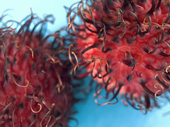 Rambutan 1 (optically active) Tags: olympusc5060 rambutan fruit macro