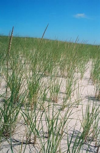 Todd Felton - sand dunes