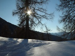 winter (josef.stuefer) Tags: winter sun snow tree nature tranquility gettyimages altoadige bz sarntal sudtirol josefstuefer sarentino