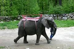 Taking a Walk (Ninox) Tags: animals localzoo