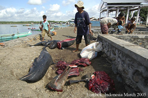 Dead Dolphins for food
