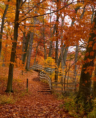 Steps in the Fall (Michael.M) Tags: 2004 fall nature burchfield park stairs michigan saveme4 deleteme10 d70