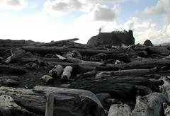 Tidal logs (selva) Tags: bea