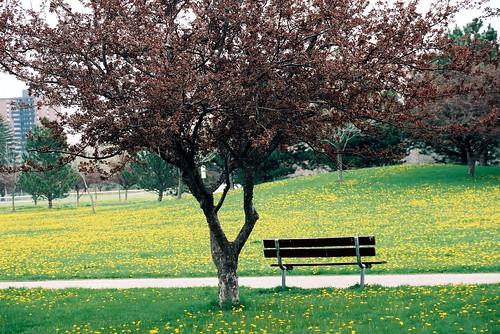 Spring Park Bench