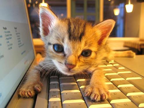 El gato que escribe el blog