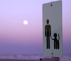 Missing Alex Magenta Sunset (Andrew Morrell Photography) Tags: dog alex borell man sign wistful magenta sunset moonrise beach texas