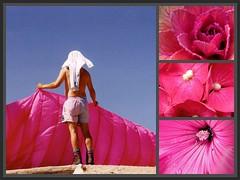 Pink summer (:Linda:) Tags: pink summer people man flower collage germany bavaria flora leute adult thuringia leisure mann hydrangea paraglider pleasure hortensie mensch malve cabbageflower gartenblume erwachsener