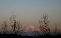 the return of sunlight (carolyn_in_oregon) Tags: mthood oregon mountain troutdale alpenglow