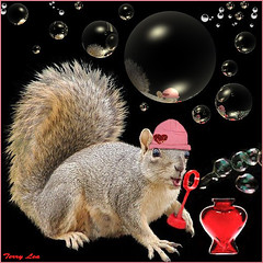 Bubbles (Terry_Lea) Tags: squirrel squirrels photoshopfun tbas