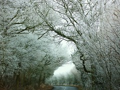 My Road (frost ) (algo) Tags: road light brown white snow black photography grey interestingness topf50 topv333 bravo frost shadows top20winter hoarfrost topv1111 chilterns topv999 gray explore topv777 algo topf100 6023 123321123n31 gtaggroup goddaym1 explore11 supereco