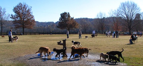 Nashville's Dog Park