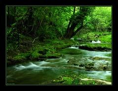 Green (alonsodr) Tags: longexposure verde green ro river sevilla andaluca topf50 nikon bravo searchthebest quality 100v10f 500v50f alonso constantina huesna magicdonkey alonsodr outstandingshots specland specnature abigfave kkfav 123f50