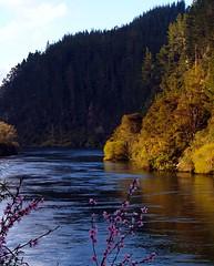 River in Spring (Catching Magic) Tags: newzealand nature water river spring olympus waikato e300 tiraudan waipapa