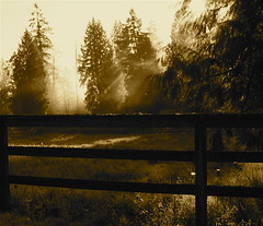sepia fog (jodi_tripp) Tags: morning light fog sepia vancouver fence bravo allrightsreserved lightrays magicdonkey joditripp challengeyouwinner wwwjoditrippcom photographybyjodtripp joditrippcom