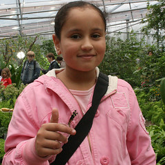 Vlinderpaviljoen Artis (siebe ) Tags: holland netherlands amsterdam butterfly zoo nederland artis vlinder vlindertuin vlinderpaviljoen vlinderkas