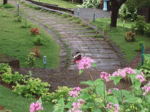 Mangalore 076