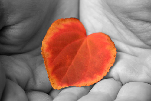 Autumn Love Heart by Louise Barr.