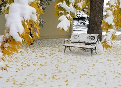 Falling Leaves (ladyloneranger) Tags: snow bench autumnleaves mapletree snowcovered fallenleaves firstsnowfall coloradospringsco ladyloneranger leavesonsnow october182006 veryearlysnowfall
