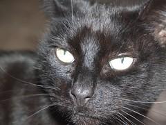Elvis (sitharus) Tags: newzealand cat raw elvis wellington e300