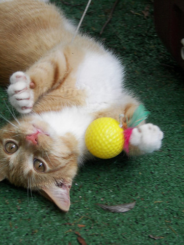 cute playful orange tabby kitten cat pic