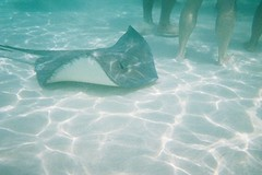 Nice legs! (melanie.phung) Tags: vacation stingrays underwatercamera melaniephung