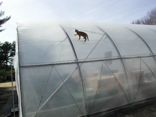 best greenhouses for sale