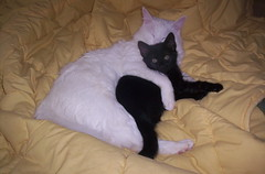 Love does not discriminate (farmgirl156) Tags: white black love true cat