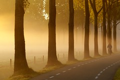 Gold (Harry Mijland) Tags: autumn trees mist holland bike bicycle fog gold bomen utrecht cyclist herfst nederland nl alpha a100 fiets goud oudzuilen zuylen oudzuylen dearharry sonyalpha harrymijland
