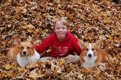 Philip with Mac and Ian (Pembroke Welsh Corgis) (wplynn) Tags: family autumn pembroke corgi welsh corgis