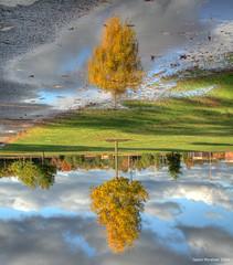 Surreal Reflection (jason_minahan) Tags: reflection fall newjersey nj princeton hdr mercercounty xti