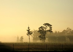 Old friends (joiseyshowaa) Tags: trees florida gainesville sunshine state sunshinestate morning mist fog misty nature sunrise top20landscape top20halloffame dawn alachua alachuacounty county joiseyshowaa joiseyshowa twilight photocontesttnc10 fence barbed wire field farm farmer